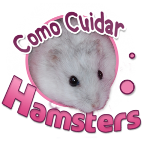 Como-cuidar-de-um-hamster-chines